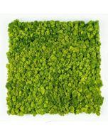 Green Acoustics- GA01 PRO 50x50 cm- panel akustyczny z mchu